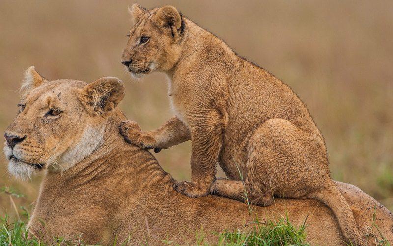 Risultati immagini per kenya safari tsavo 800x500